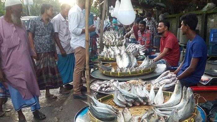রামগতি-কমলনগরের হাট-ঘাট 'শীতের ইলিশে জমজমাট'
