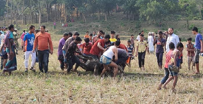 ভারতীয় মহিষের আ'ঘাতে বাংলাদেশি নি'হ'ত, আহত দুই বিএসএফ