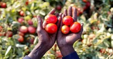 করোনাভাইরাস বিশ্বকে খাদ্য সংকটে ফেলতে পারে