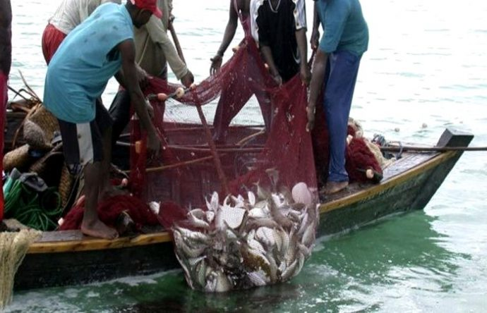মাছ কারখানায় একজনের মাধ্যমে আক্রান্ত ৫৩৩ শ্রমিক