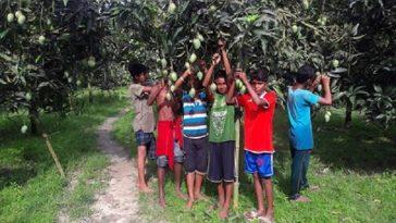 ঠাকুরগাঁওয়ে শিক্ষার্থীরা দিনমজুরের কাজ করছে, স্কুল ছুটি!
